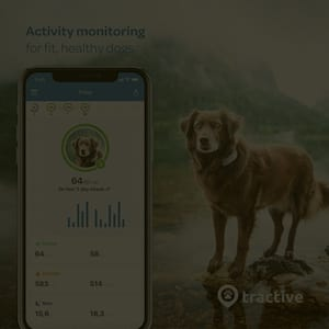 Dog fitness tracker is amazing gadget to track your dog's activity and health.
