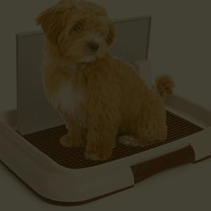 Device like indoor dog potty could be handy for indoor peeing training