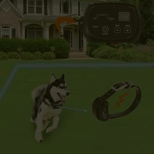 Dog is running with invisible dog fence installed