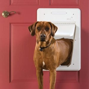 PetSafe Electronic Smart Door for large dogs