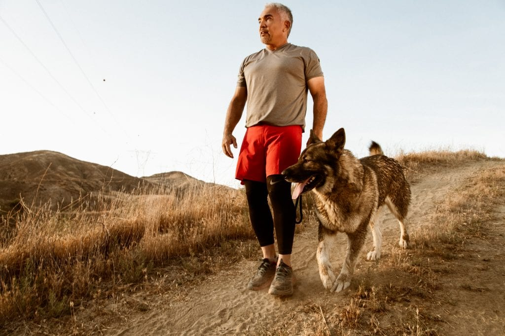Cesar Millan during training process with a dog and halo collar.