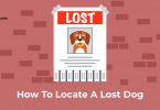 Lost dog sign