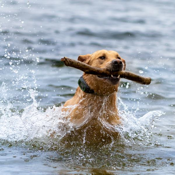 Using SpotOn dog virtual fence in the water